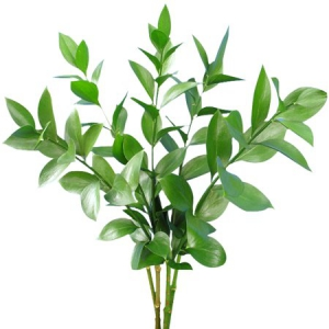 Ruscus Leaves