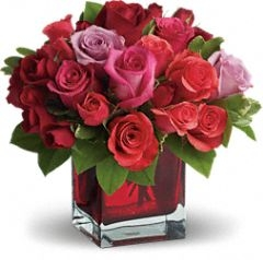 Roses , Roses, Roses
