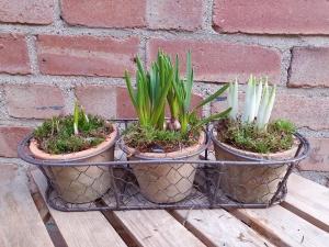 Trio Of Terracota Planter