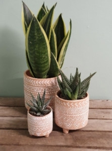 Trio Of Mexican Planters