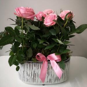 Pink Roses Planter