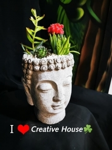 Buddah Cactus & Succulent