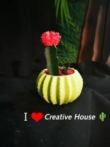 Cactus Mini  - Ruby Ball