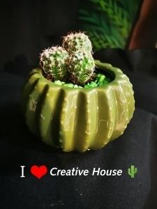 Mini Cactus - Parodia