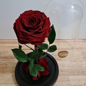 Red Preserved Rose
