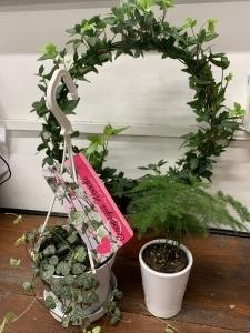 Trio Of House Plants