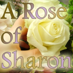 A rose of sharon portland or 97203 mightylinksfo