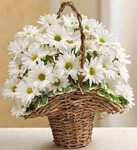 Basket Full Of Daisies For Sympathy