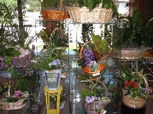 Baskets Of Plants
