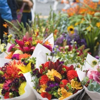 Bendigo's World of Flowers - Bendigo