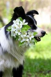 Biggar Blooms