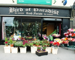 Bird of Paradise