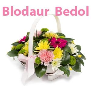 Blodaur Bedol