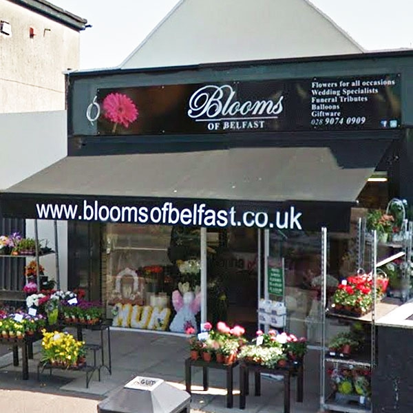 Blooms of Belfast