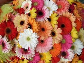 Brant Florist