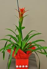 Bright Bromeliads