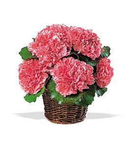 Carnation Exoression Basket