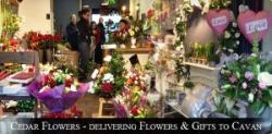 Cedar Flowers