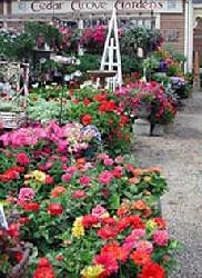 Cedar Grove Gardens, Inc