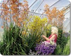 Chellowdeen Florist