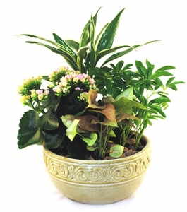 Click Here For Alternate Products.  Peaceful Dish Garden For Sympathy