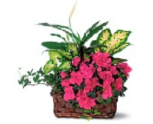Colorful European Garden Basket