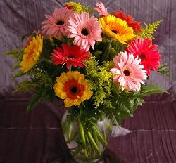 Colorful Gerbera Daisys