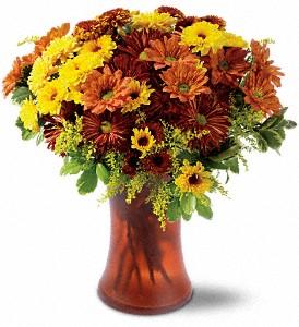 Country Chrysanthemums