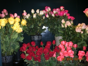 Cut Long Stemmed Roses