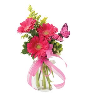 Gerbera & Butterfly Vase