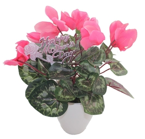 Giftwrapped Plant