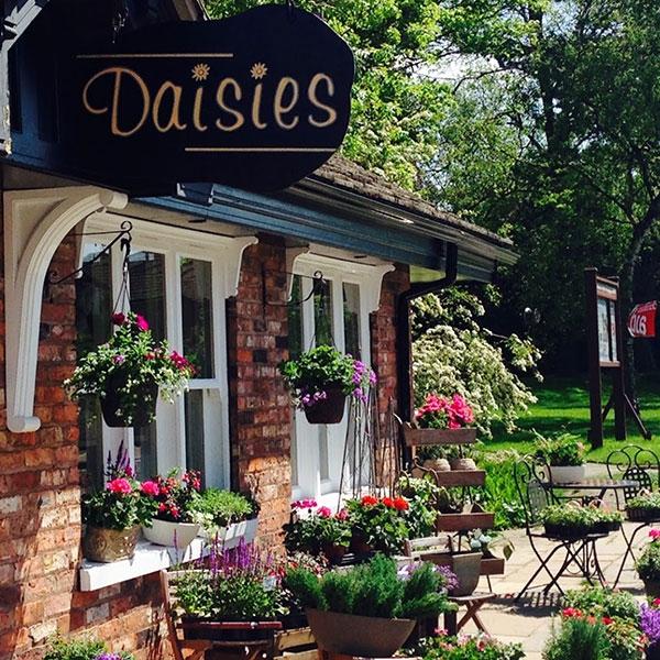 Daisies Floral Design