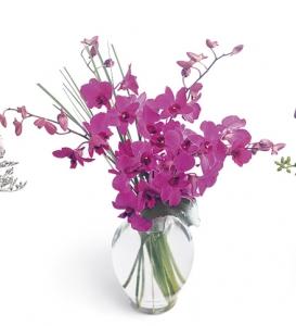 Denedrobium Orchids