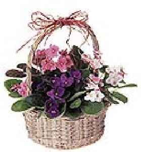 Dish Garden In Basket