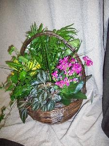 Dish Garden In Basket