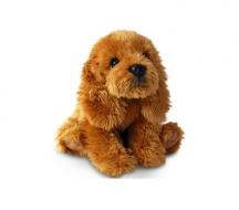 Doodle Schnodle Dog