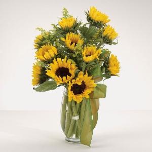 EV 27-21 Sunflower Fields