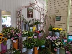 Floral Fancies Florist