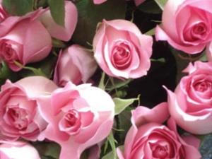 Florist  Special 100 Roses Bouquet