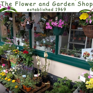 Flower and Garden Shop