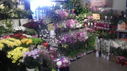 Flower Station - Cheltenham