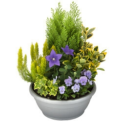Arrangement Of Outdoor Plants