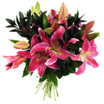 Cut Lillies In Pink