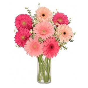 Order Gerb Appeal flowers