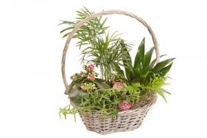 Basket of green plants