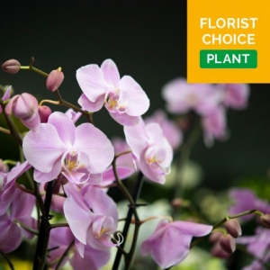 Order Florist Choice Plant flowers