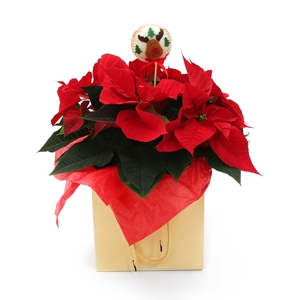 Order Symbol of Christmas flowers