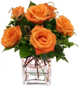 Orange Burst Roses