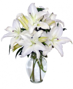 Casa Blanca Lilies