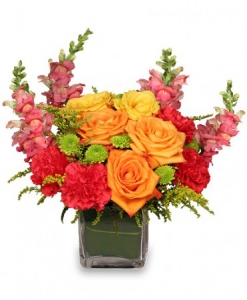 Order Dynamic Colours flowers
